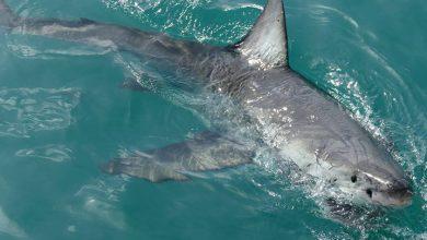 Photo of Niña de nueve años es mordida por un tiburón en una playa de Florida