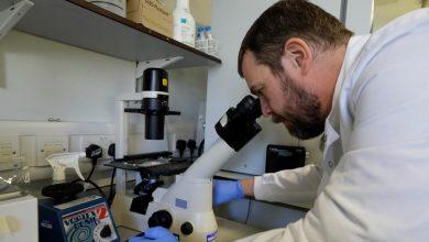 Photo of Desarrollan un virus que mata el cáncer de colon activando el sistema inmunológico