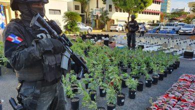 Photo of Desmantelan tres invernaderos para el cultivo y empaque de marihuana en SDE