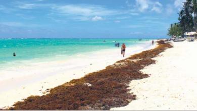 Photo of El sargazo desafía la recuperación del turismo