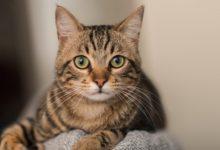Photo of Purina One tiene una nueva línea de nutrición para gatos